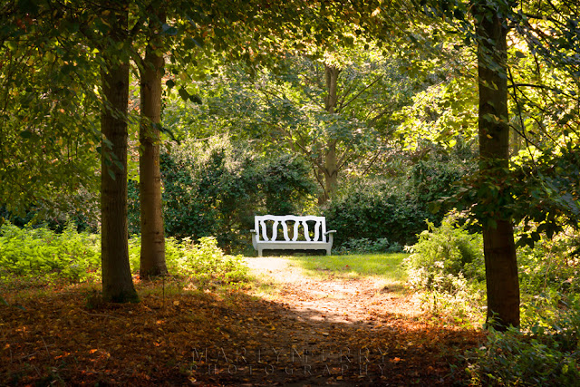 Woodland bench at Oxburgh Hall in Norfolk, lit by the afternoon sun.