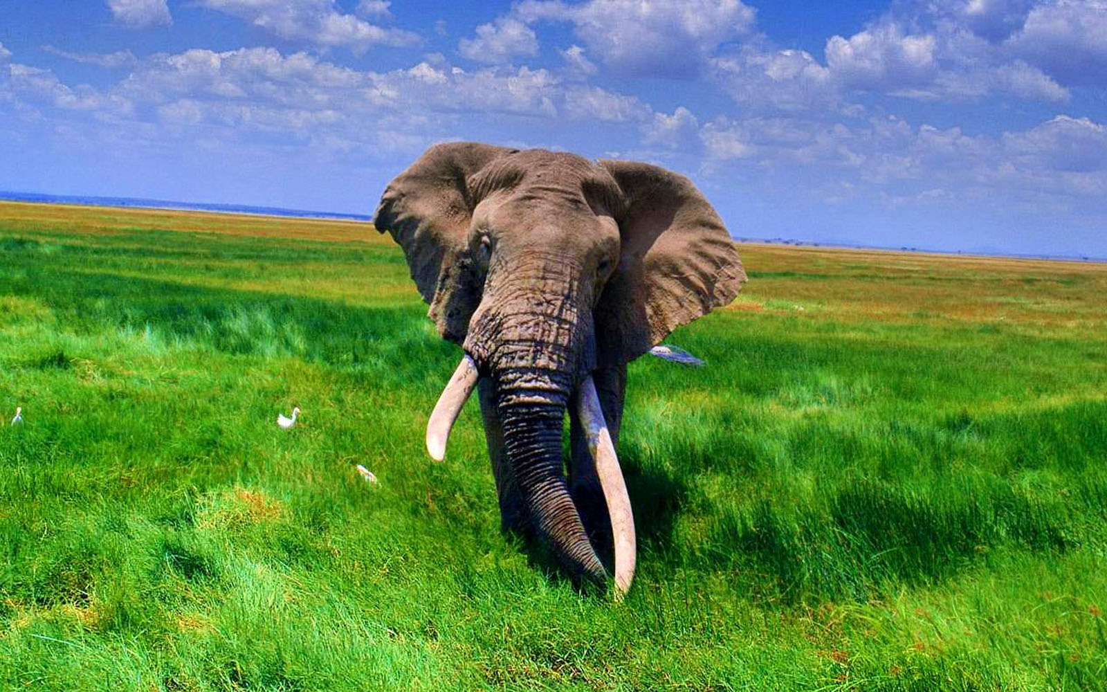 wallpaper: African Elephant Wallpapers