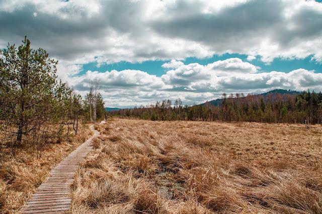 Rundweg im Säumermoor - Soumarské rašeliniště | Wandern im tschechischen Böhmerwald | Nationalpark Sumava | Soumarský Most | Wandern Šumava 05