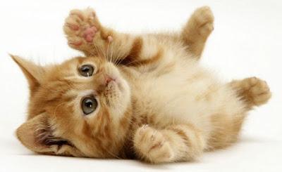Kedi-Maması