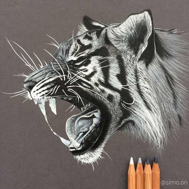 14-Tiger-Simon-Balzat-Colored-Pencils-make-Beautiful-Drawings-www-designstack-co