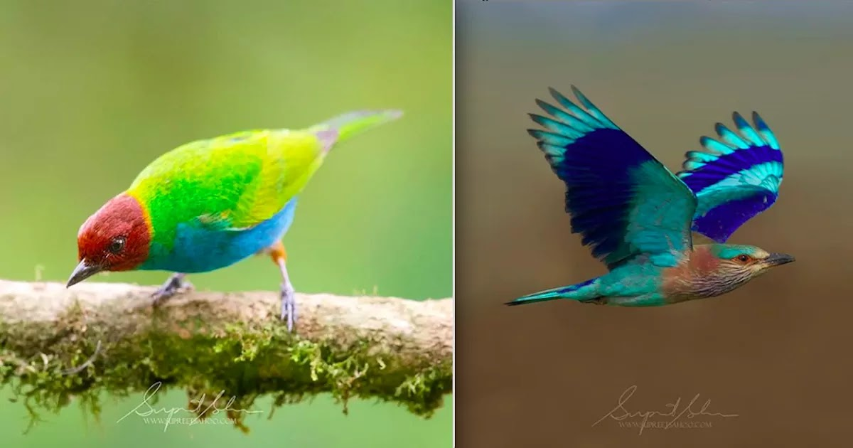 Photographer Captures America's Most Colourful Rainforest Birds In A Fantastic Collection That Will Blow You Away!