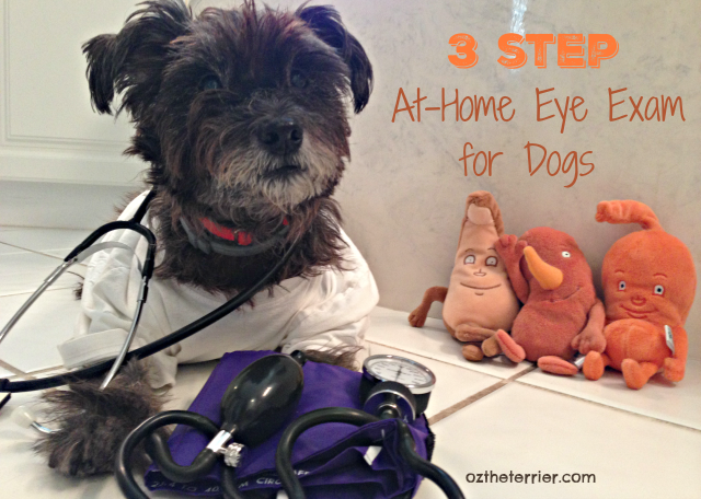 Dr Oz the Terrier 3 step at-home eye exam for dogs