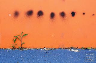 Fotografía de una planta pegada a un muro incluida en el calendario 2020