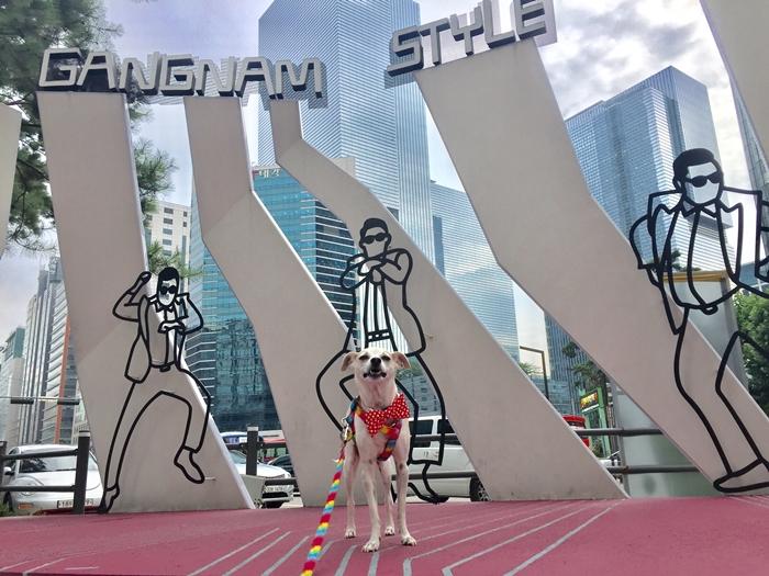 HAPPY is Gangnam Style! HAPPY goes to Seoul, Korea!