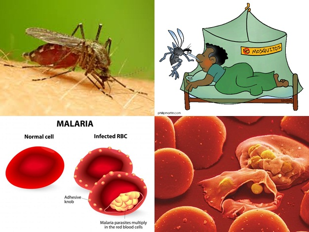 Alternatif Pengobatan Untuk Masalah Malaria