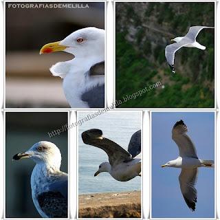 http://fotografiasdemelilla.blogspot.com