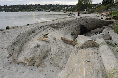 Beach with logs