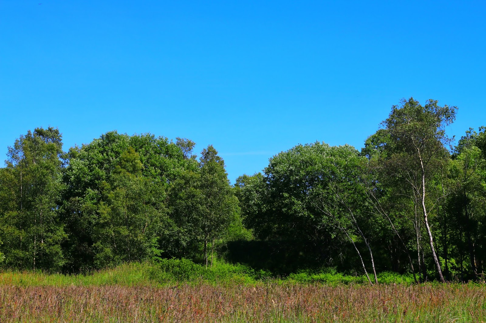 Photo of green trees against a blue sky