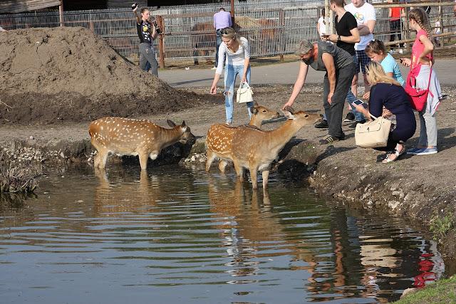 олень, косуля, зоопарк в Клайпеде, Клайпедский зоопарк