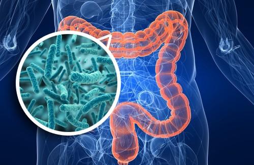 Bactérias: Importância