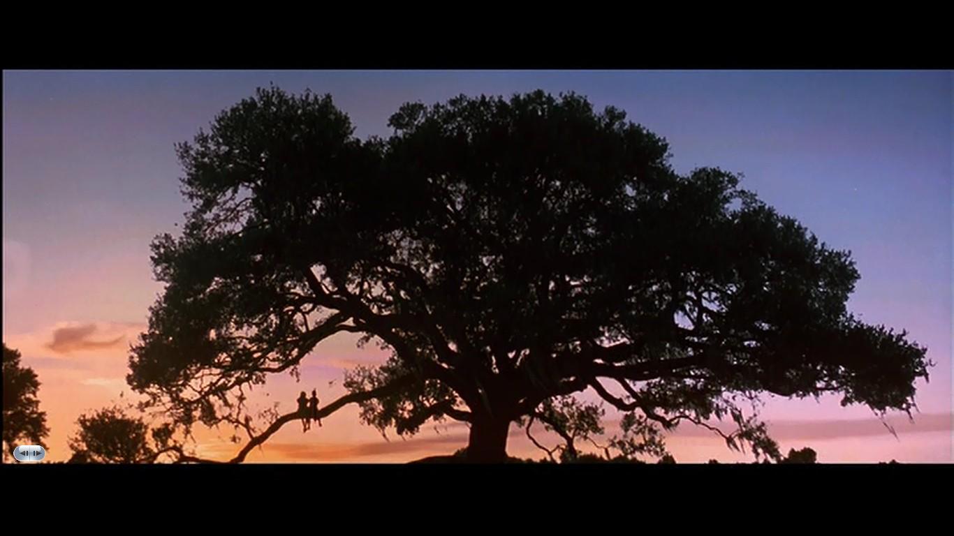Shawshank Redemption Tree 4 Bp Blogspot Com On Reddit Com