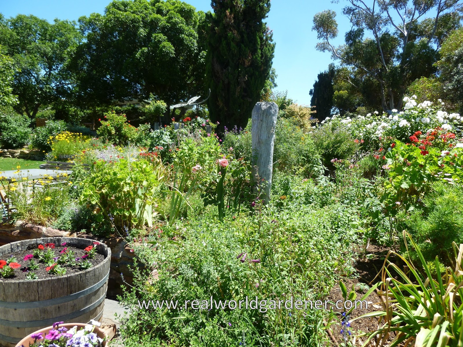 Real world gardener mass planting for a mediterranean for Garden design podcast