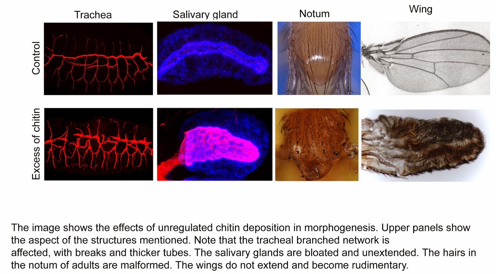 Study done by Dr Marta Llimargas