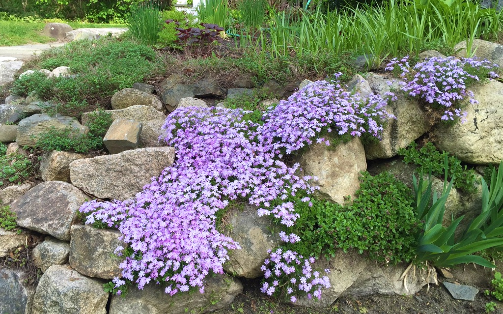 Sopo cottage willard beach gem open house 6 26 12 4 pm for Landscaping plants that stay small