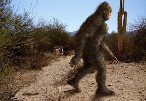 Bigfoot 'Gifting' Scenario - Bradshaw Mountains, Arizona