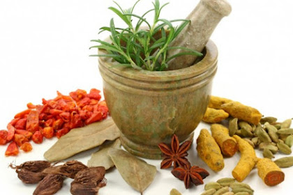 30 Tamanan Obat Dan Khasiatnya Yang Mudah Di Temukan
