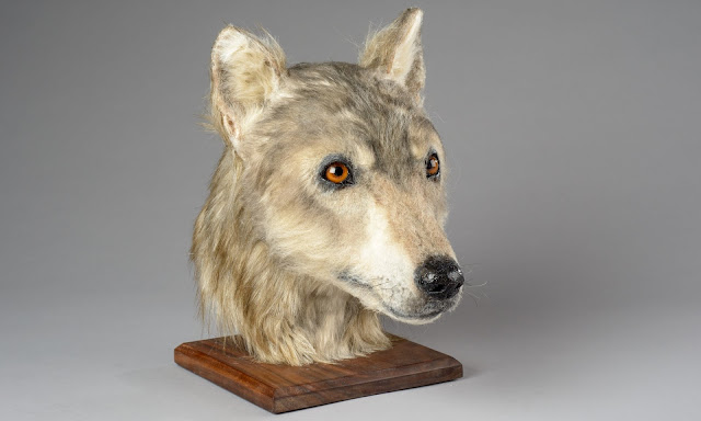 Neolithic dog's head recreated using Orkney skull