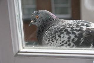 Птица как вестник смерти - распространенное суеверие. Но когда это происходит с близкими... :(
