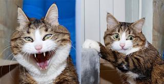Ανάπηρος γάτος με τρομερές εκφράσεις προσώπου έχει ξετρελάνει το διαδίκτυο
