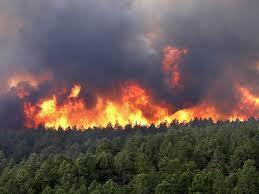 Incendio_Florestal
