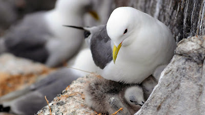 dove with its family