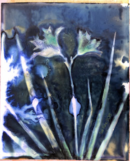 Wet cyanotype_Sue Reno_Image 422
