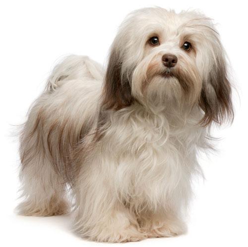 Выпадение шерсти у собак