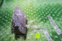 Box mit Schleife: 50pcs Wedding Candy Boxes Butterfly Laser Cut Kartonage Schachtel Bonboniere Geschenkbox Hochzeit (Purple)