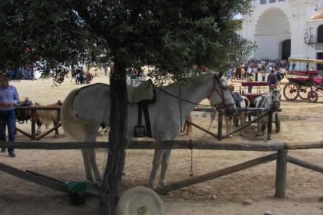 paard vastgebonden aan houten balk in El Rocio, Spanje