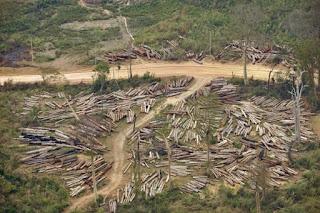 Logging site in Bolikhamsai, Laos
