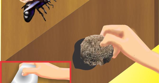 comment tuer les abeilles charpentieres. Black Bedroom Furniture Sets. Home Design Ideas