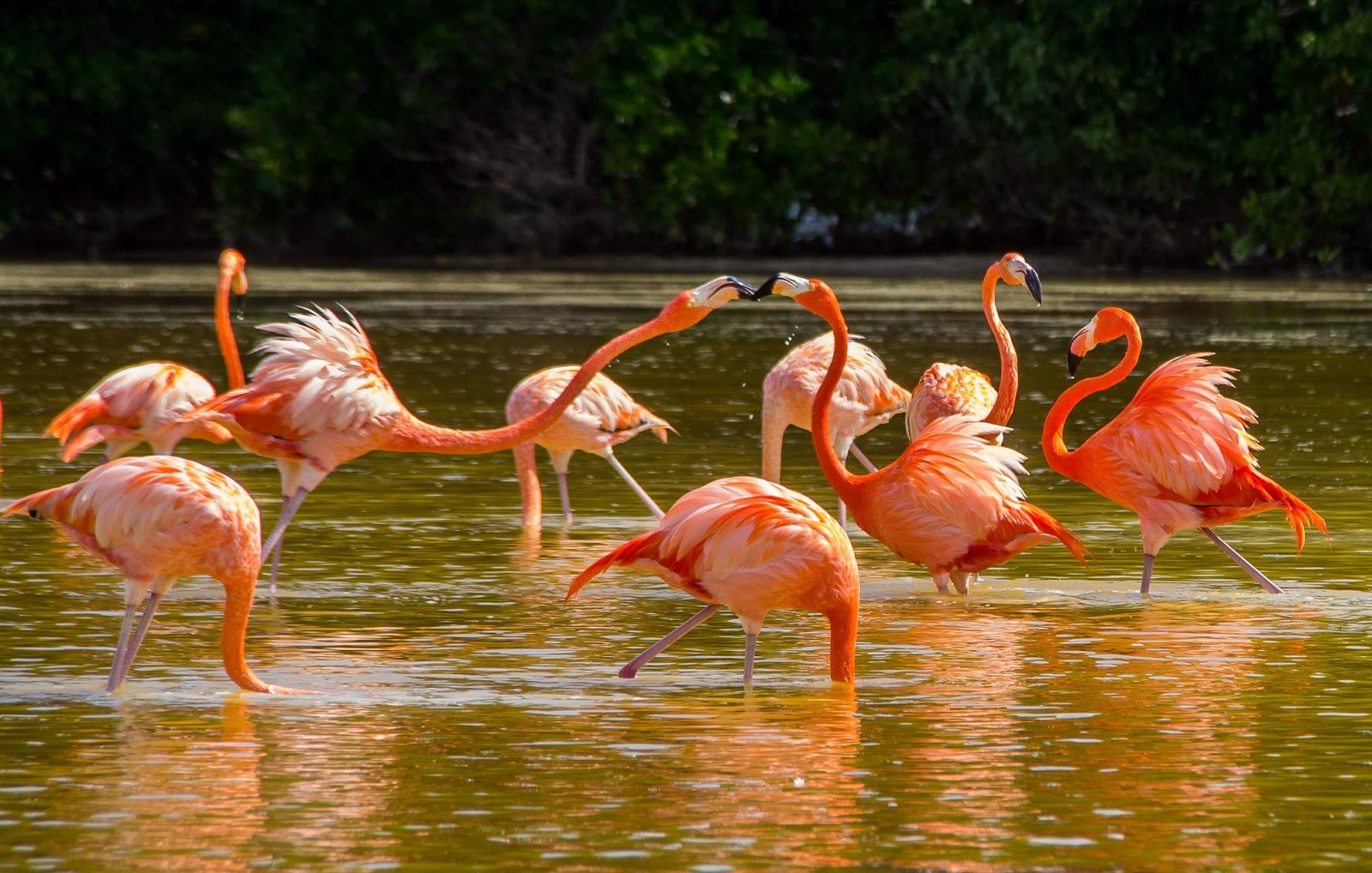 """<img src  Largest populations of pink flamingos in the world.jpg"""" lt="""" http://dailytravelexperience.blogspot.rs/"""" />"""