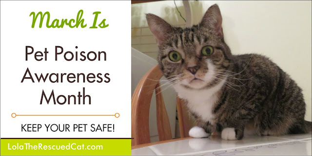 pet poison awareness month|5 top poisons