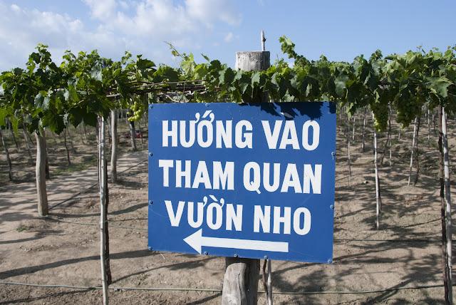 Tham quan vườn nho Ba Mọi ở Ninh Thuận