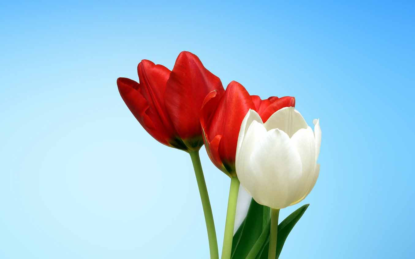flowers images download for whatsapp