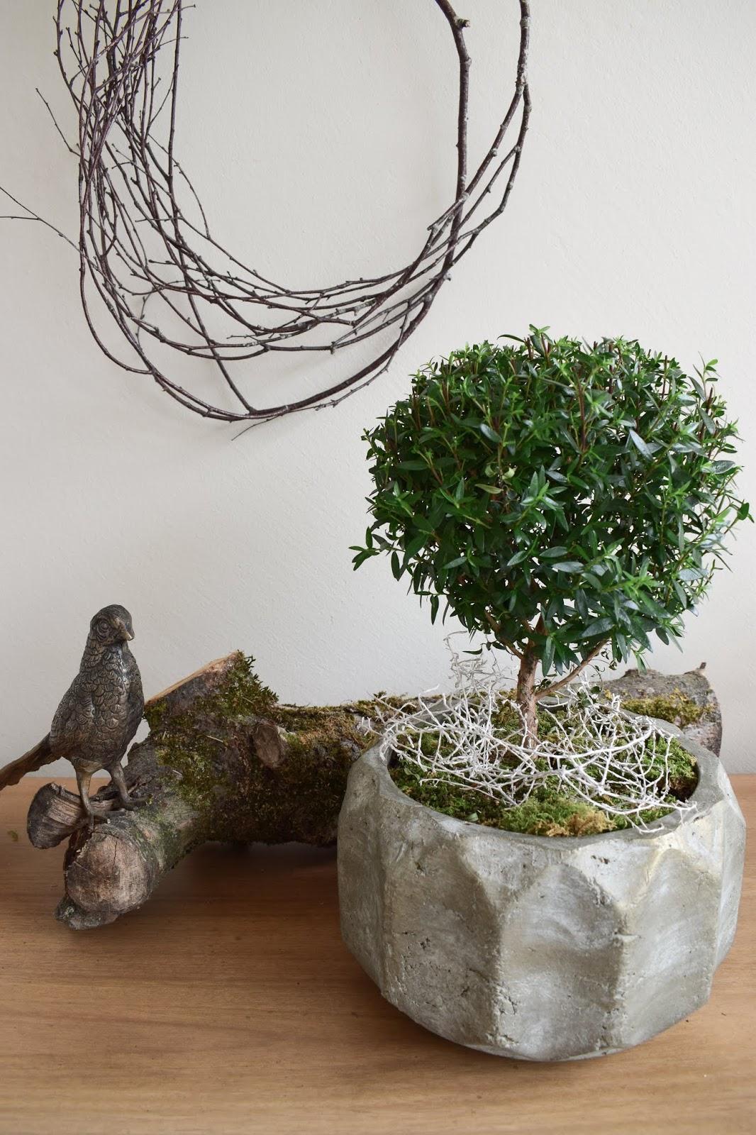 Naturdeko mit Topfpflanze: Verschönerung Übertopf Zimmerpflanze mit Moos Eukalyptus Schleierkraut. Myrte Dekoidee Deko Dekoration Übertopf natürlich dekorieren einfach selbermachen