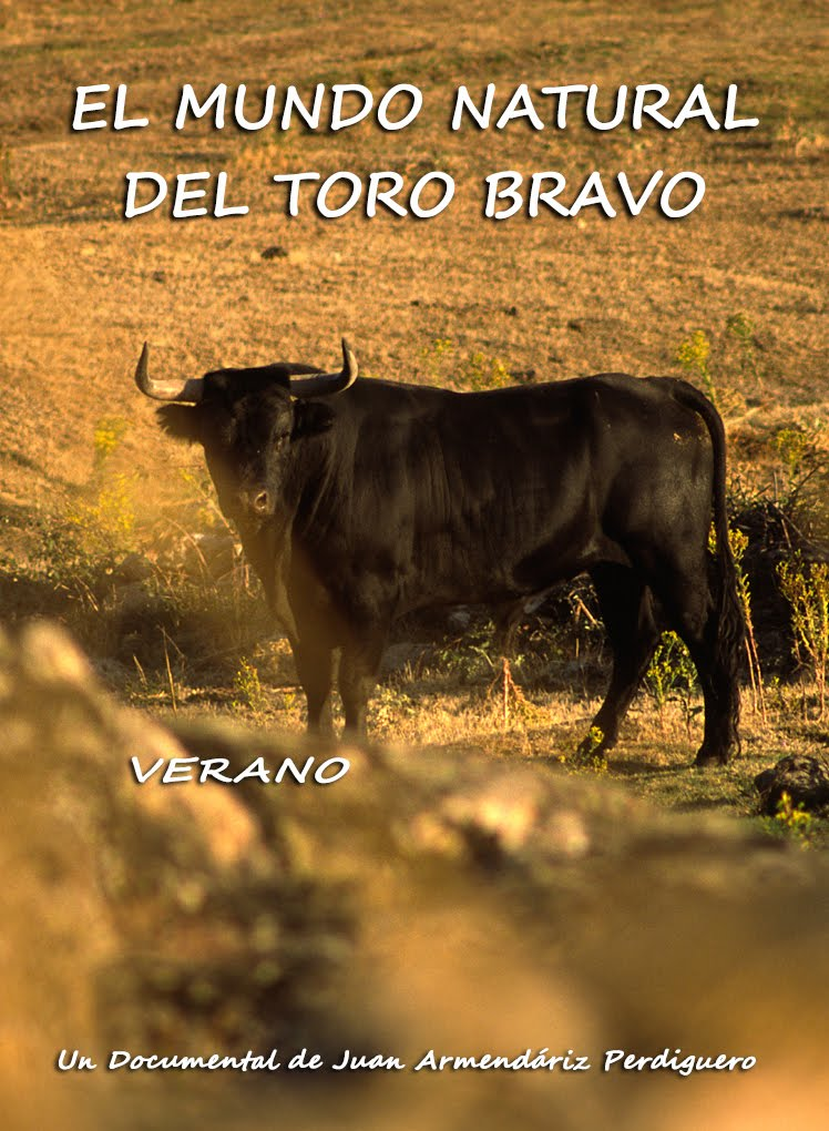 DOCUMENTAL. EL MUNDO NATURAL DEL TORO BRAVO. VERANO. VIMEO