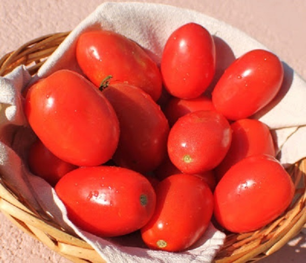 fresh plum tomatoes in a basket