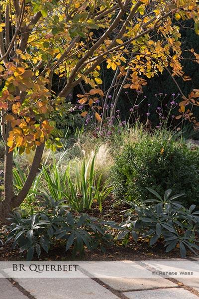 Blumenbeete mit Gräsern und der Perückenstrauch mit Herbstfärbung