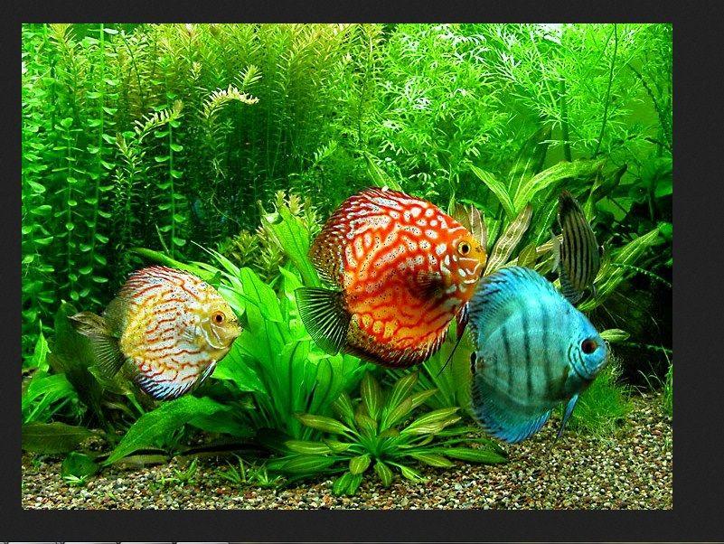 Jenis Ikan Hias yang Mudah Dipelihara