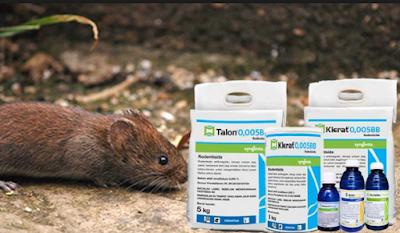Cara Membasmi Tikus Menggunakan Obat