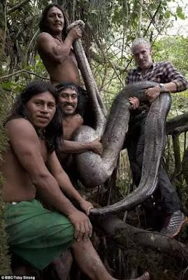 Largest ever Anaconda is captured in Ecuador (photos)