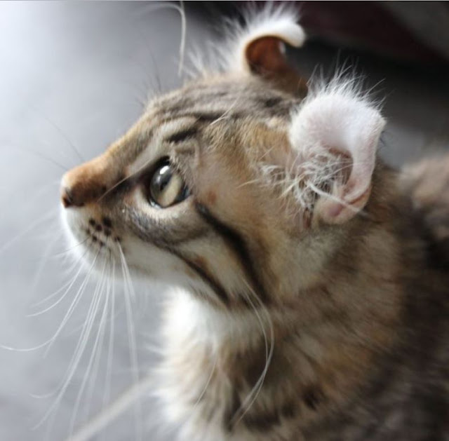 lesbiennes manger chatte fermer