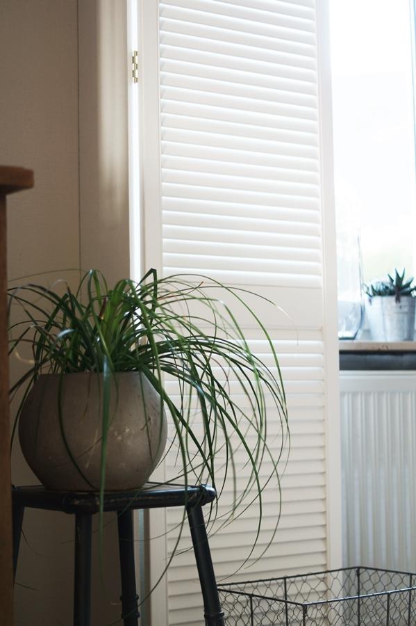 Blog + Fotografie by it's me! | fim.works | VELUX Mückenschutz | Elefantenfuß | weißer Fensterladen