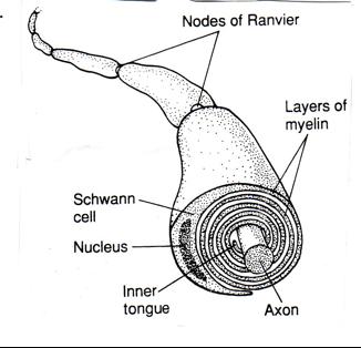 Physician's Notebooks: 93 Secrets of the Brain tissues  A Starter