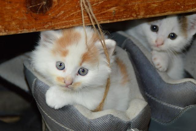 Wörterliste, Ideen, Seniorenarbeit, Junge Katzen, nett, Blog