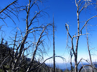 Damage from the 2002 Curve Fire on Windy Gap Trail, Crystal Lake, Angeles National Forest