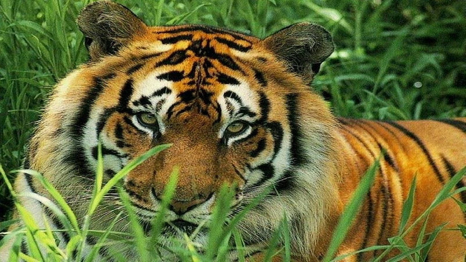 ANIMALS OF PLANET EARTH: BIG CATS OF THE WORLD