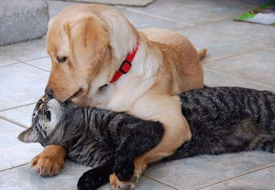 Dog Hugging cat passionately